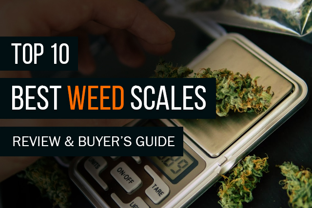 Top 10 Best Weed Scales